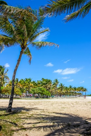 beachfront: Palms of Lummus Park in South Beach neighborhood of Miami Beach, which served as the backdrop for many films. This beachfront park is one of the most popular destinations in Miami, Florida.