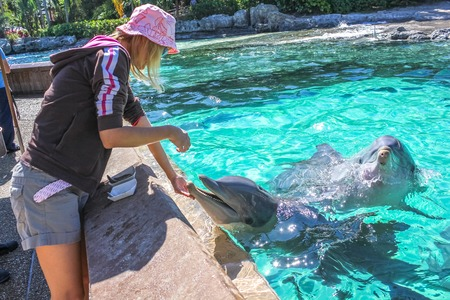 feeds: Woman feeds a laughing dolphin in a pool.