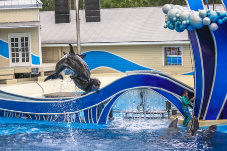 sea world: Orlando, Florida, United States - April 22, 2012: two dolphins jumping in Azul Show at Seaworld. Seaworld is an animal theme park, oceanarium and to a marine mammal park. Editorial