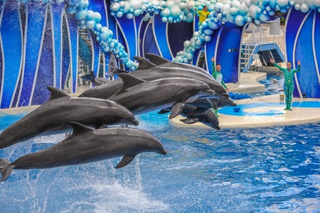 sea world: Orlando, Florida, United States - April 22, 2012: group of dolphins jumping together in Azul Show at Seaworld. Seaworld is an animal theme park, oceanarium and to a marine mammal park.