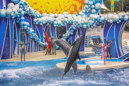 sea world: Orlando, Florida, United States - April 22, 2012: two dolphins performs in Azul Show at Seaworld. Seaworld is an animal theme park, oceanarium and to a marine park. Editorial