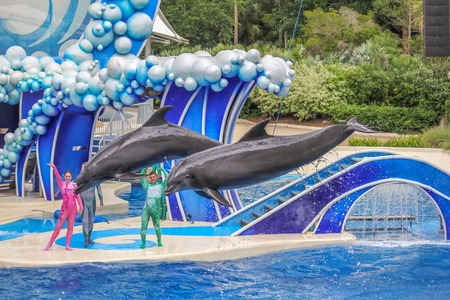 sea world: Orlando, Florida, United States - April 22, 2012: two dolphins jumps in Azul Show at Seaworld. Seaworld is an animal theme park, oceanarium and to a marine mammal park.