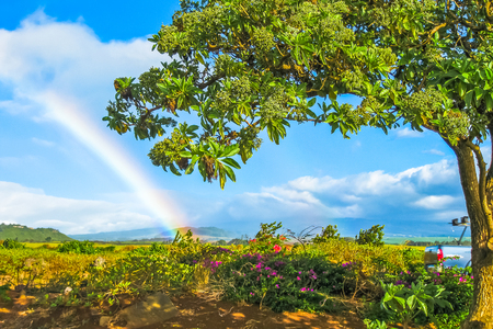 Scenic landscape with tropical vegetation, blossoming spring and rainbow in the background. Maui, Hawaii, Unites States. Concept holiday background. Stock Photo