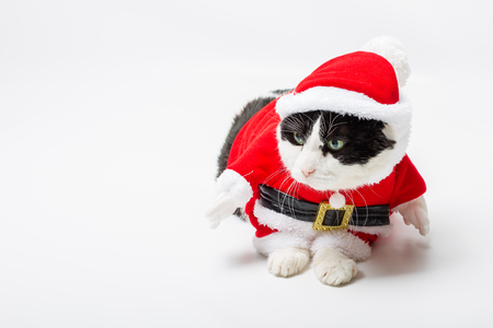 christmas pussy: funny cat with Santa Claus hat on studio white background and copy space. Christmas holiday concept for greeting card. Stock Photo