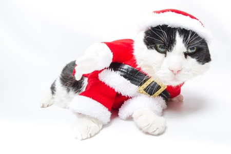 christmas pussy: drunk cat in Christmas dress and Santa Claus hat on studio white background. funny concept.
