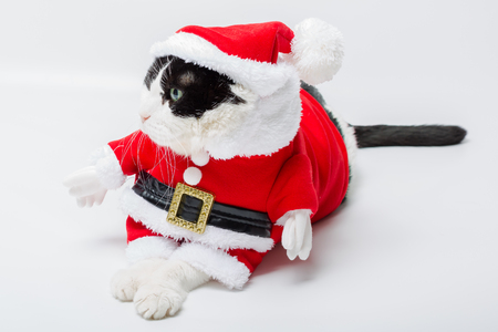 christmas pussy: nice cat in Christmas dress and Santa Claus hat on studio white background. resting and looking left Stock Photo