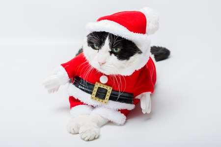 christmas pussy: tired cute cat in Christmas dress and Santa Claus hat sitting on studio white background. Christmas holiday concept. Stock Photo