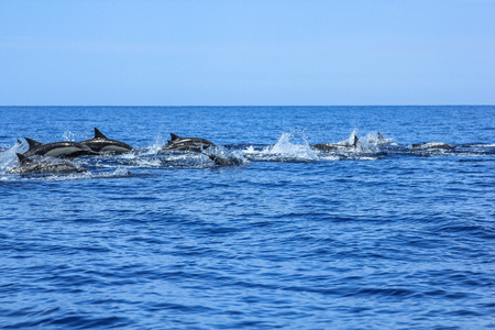 Dolphins jumping Mexico