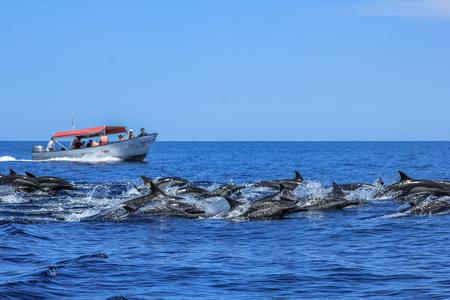 Dolphins jumping in Baja California