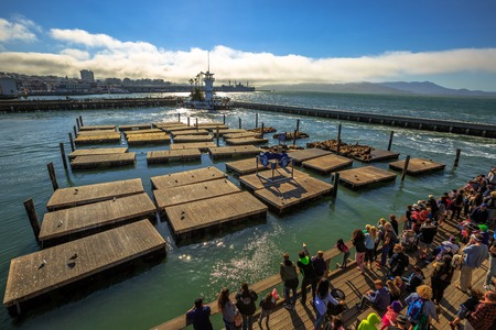 San Francisco, California, United States - August 14, 2016: aerial view of popular tourist crowd observe Sea Lions on wooden platforms. Pier 39 at Fishermans Wharf. American travel in San Francisco.