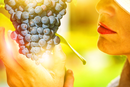 specific: Closeup of a farmer woman tasting the grapes of a tree. Concepts of healthy food, contact with nature, sustainable living. Woman looking at grapes ready for harvest. Sunset shot.