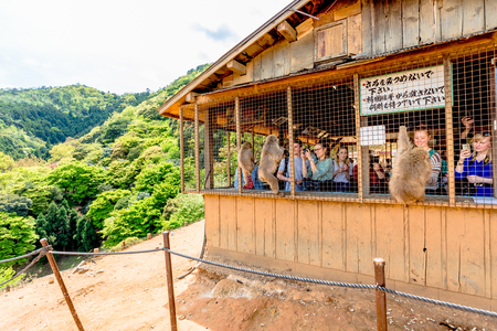 Kyoto, Japan - April 27, 2017: tourists photograph and feed Japanese macaque from the hut atop Iwatayama Monkey Park in Arashiyama. People enjoy interaction with monkey. Leisure and tourism concept. Editorial