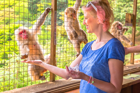 Young happy woman eating at Japanese macaque inside popular Iwatayama Monkey Park in Arashiyama, Kyoto, Japan. Tourist enjoys interaction with Macaca Fuscata monkey. Leisure and tourism concept.