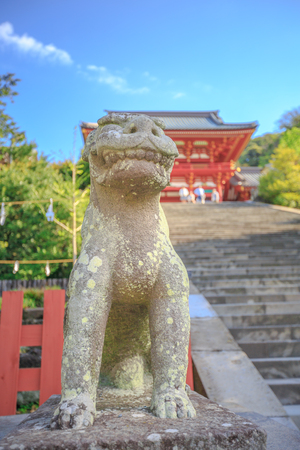One of two shrine dogs at the base of the great staircase of Tsurugaoka Hachiman main hall, the most important Shinto shrine in Kamakura, Japan. The two dogs expressing a deep religious meaning.