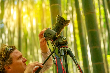 Nature photographer photographing giant bamboo forest at sunset in Take-dera forest, the popular tourist destination in Hokoku-ji temple of Kamakura town of Japan. Blurred background.