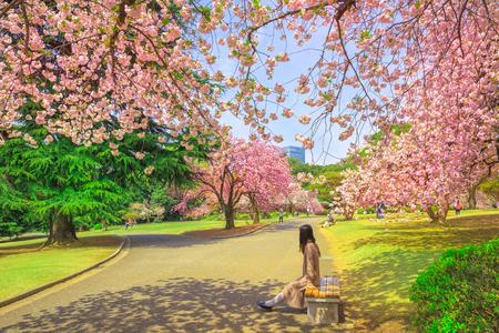 Nicht identifizierte Frau entspannt sich unter blühendem Kirschbaum in nationalem Garten Shinjuku Gyoen. Shinjuku Gyoen ist der beste Ort in Tokio, um Kirschblüten zu sehen. Frühling, blauer Himmel.