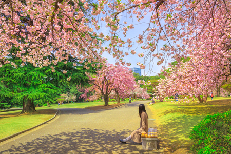 Unidentified woman relaxes under blossoming cherry tree in Shinjuku Gyoen National Garden. Shinjuku Gyoen is the best places in Tokyo to see cherry blossoms. Springtime, blu sky. Stock Photo