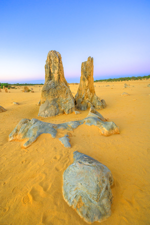 Pinnacle limestone formation of desert of the Pinnacles in Nambung National Park at twilight. These big pointed stones are the major tourist attraction of Western Australia. Vertical shot.