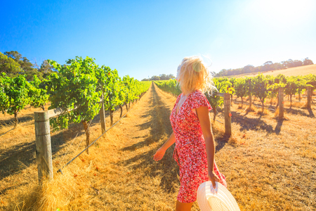 Australian vineyard. Caucasian farmer walks carefree among the rows of white grapes. Blonde female with red dress and hat getting ready for harvest. Sunset light. Margaret River, Western Australia.