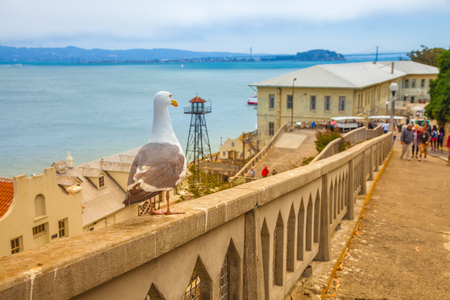 A seagull on focus with San francisco prison Alcatraz on defocused background. Concept of hope and American freedom and social redemption.
