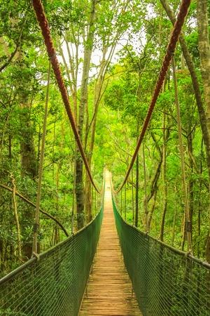 Wooden rope bridge or suspension bridge in rainforest through the treetop. Garden Route, Plettenberg Bay, South Africa. Stock Photo