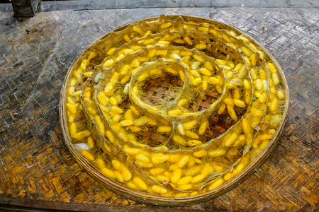 Plate with the cocoons of silkworm in a silkworm farm waiting for butterflies to born and begin again the life circle with reproduction. The silk is extracted from these chrysalis boiled in hot water.