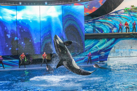 Orlando, Florida, United States - April 22, 2012: the killer whale, performs at Seaworld. Seaworld is an animal theme park, oceanarium and to a marine park.