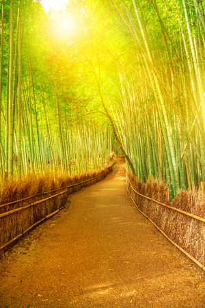 Bamboo grove at Sagano in Arashiyama in sunlit. The forest is Kyotos second most popular tourist destination and among the 100 phonetic stations in Japan. Meditative listening concept. Vertical shot.