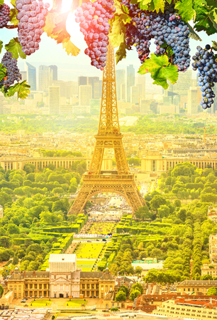 The frame of red grapes hanging on Tour Eiffel landscape at sunset in Champ de Mars.Seasonal picturesque vertical background of French wine land of France in Europe. Scenic wallpaper with Eiffel Tower Stock fotó