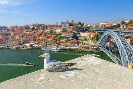 Seagull on Porto skyline. Freedom and travel concept. Aerial view of iconic Dom Luis I Bridge on Douro River on the horizon. Beautiful sunny day.
