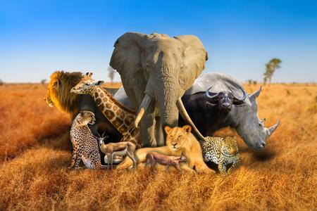 Big Five and wild african animals composition on savannah nature bokeh background. Serengeti wildlife area in Tanzania, Africa. African safari scene landscape. Wallpaper background. Blue sky.