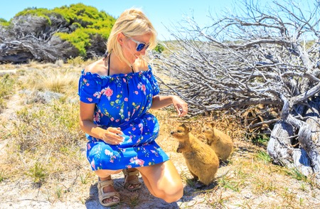 Smiling blonde caucasian tourist woman interacts with two curious Quokka in the wilderness of Rottnest Island, Western Australia. Travel in Australian summer season. Sunny day.