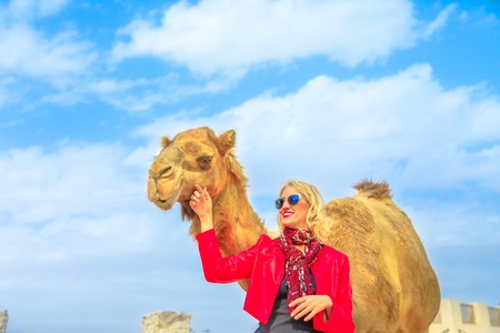 Happy woman touches and interacts with a camel in Doha city center, near Souq Waqif, the old market in Qatar. Caucasian tourist traveler in Middle East, Arabian Peninsula. Sunny day blue sky. Stockfoto