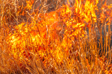 Fire background conceptual. Close-up of forest in an area of trees and bush in flames. Dangerous dry grass fires. Strength of fiery conceptual element.