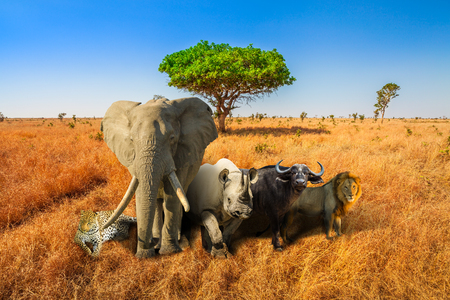 Africa safari scene with wild animals. African Big Five: Leopard, Elephant, Black Rhino, Buffalo and Lion in savannah landscape. Copy space with blue sky. Wildlife background.