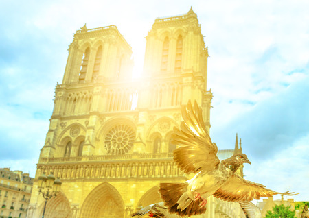 Closeup of pigeon in flight in the foreground at sunset light. Famous Cathedral Notre Dame de Paris, Ile de la Cite, Paris, France on background. The cathedral is in French Gothic architecture style.