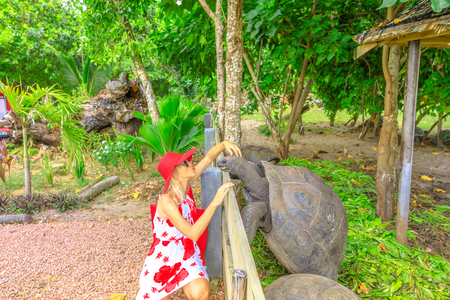 Elegant caucasian tourist woman kissing a standing male of Aldabra Giant Tortoise, Aldabrachelys gigantea, a tortoise native to Aldabra atoll. Popular tourist attraction in Praslin, Seychelles. 版權商用圖片