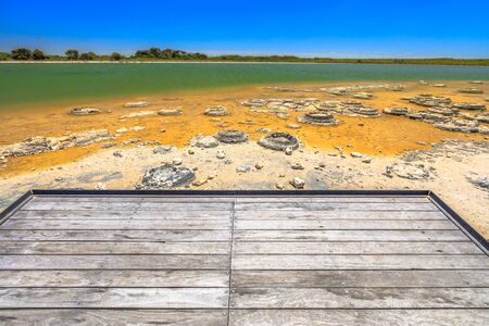 Australian landscape of Stromatolites at Lake Thetis, a saline coastal lake in Cervantes, Western australia. Sunny with blue sky. Wooden bordwalk on background. Copy space. 写真素材 - 128239198