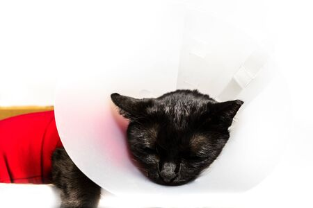 Close up of black cat with Elizabethan collar, E-Collar, Buster collar or pet cone on white backgorund. Concept illness and veterinary clinic. Rehabilitation after veterinary therapy or surgery.