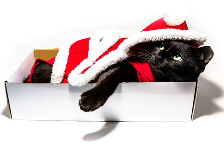 Black cat in Christmas dress and Santa Claus hat resting on studio white background. resting and looking down with copy space. Archivio Fotografico - 134370913