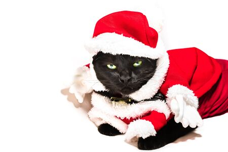 Black cat in Christmas dress and Santa Claus hat on studio white background and copy space for greeting card. Archivio Fotografico - 134370917