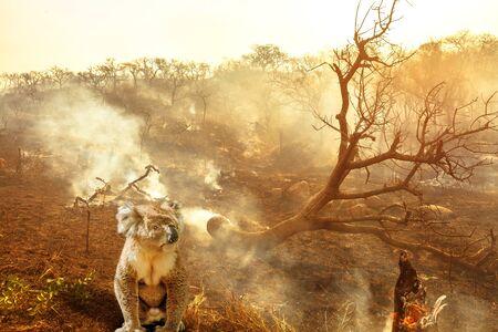 Komposition über australische Wildtiere in Buschfeuern Australiens im Jahr 2020. Koala mit Feuer im Hintergrund. Das Feuer im Januar 2020 in Australien gilt als das verheerendste und tödlichste, das jemals gesehen wurde
