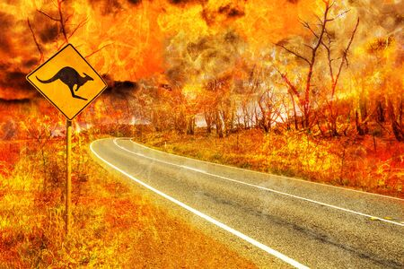 Bushfires in Australia. Warning kangaroo crossing sign on country road with Australian forest fire on background. Conceptual: save kangaroos, global warming, natural disaster, climate change.