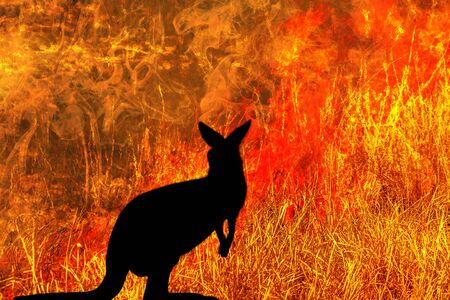 kangaroo silhouette looking a fire in Australia forests. Australian wildlife in bushfires 2019 and 2020. Conceptual: save kangaroos, global warming, natural disaster, climate change. Stock Photo