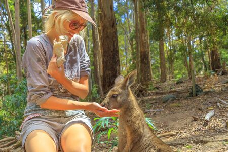 Tourism in Tasmania forests. Smiling caucasian woman feeding kangaroo from hand outdoor. Encounter with Australian marsupial animal in Australia.