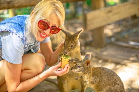 Smiling caucasian woman feeding two wallaby from hand outdoor. Encounter with Australian marsupial animal in Australia. A wallaby is a small or mid-sized macropod native to Australia. 写真素材