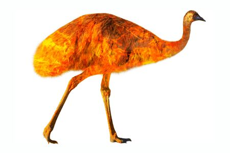 Composition about emu wildlife in the Australian bushfires in 2020. Emu with fire isolated on white background. Dromaius novaehollandiae species.