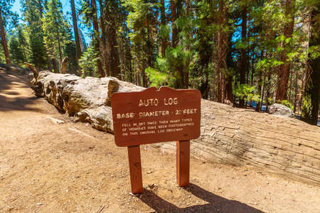 Auto log pathway in Sequoia National Park, United States of America. Auto Log on Moro Rock-Crescent Meadow Road. Pathway cut into the top of a fallen sequoia, for the cars to drive atop.