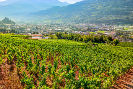 Terraced hills and vineyards aroud Tourbillon Castle in Sion, capital of canton of Valais. Sion is located in one of most important wine regions in Switzerland. Wine tasting tours.