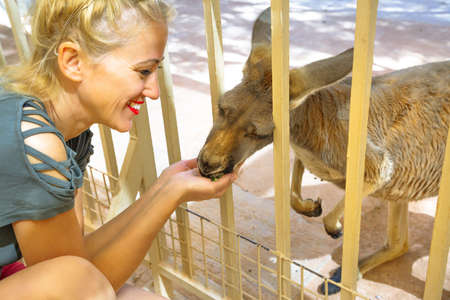 Blonde tourist woman feeding kangaroo in Australia. Interacting with cute kangaroo orphan. Australian Marsupial in South Australia, Central Australia, Red Center. 写真素材